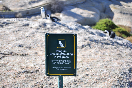 Boulders Beach penguin breeding site sign