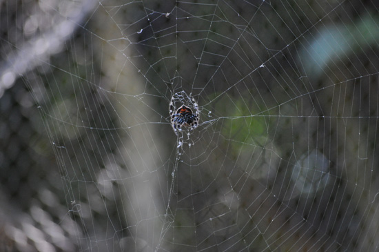 Spider in web at World of Birds