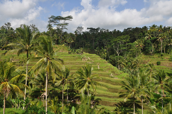 Bali - Tegalalang rice terraces