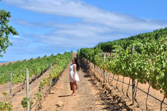 Embracing Style at the Groot Constantia Vineyards